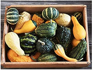 Ornamental Gourds - Small Mixed Gourds and Colors - 50 Seeds Approximately