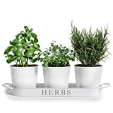 """Barnyard Designs Herb Pot Planter Set with Tray for Indoor Garden or Outdoor Use, White Metal Succulent Potted Planters for Kitchen Windowsill, (Set of 3, 4.25"""" x 4"""" Planters on 12.5"""" x 4' Tray)"""