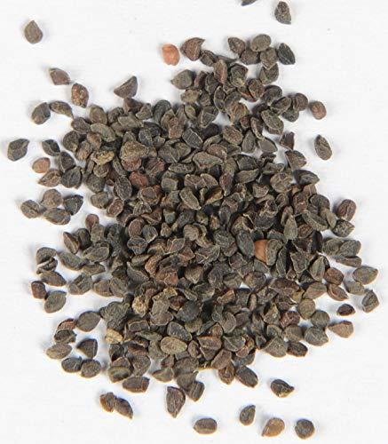 Blaukissen Mischung Aubrieta Grandiflora 500 Samen