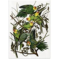 YQQICC ポスタープリントウォールアートキャンバス絵画オウム鳥アメリカイラスト写真リビングルームの装飾-40x60cmフレームなし