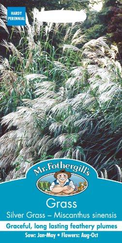 Mr Fothergill 's 14522Gras Silber Gras–Chinaschilf Early Hybriden Samen