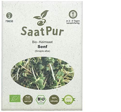 Senf Mustard BIO Keimsprossen von SaatPur - Sprossen, Microgreens - 50g