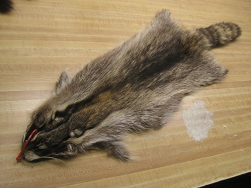 Tanned Raccoon Hide #1 Quality Fur Coats Pelts Hats Bags