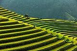 LFNSTXT Rompecabezas para adultos, 1000 piezas, vietnam Mountains Fields Mu Cang Chai arroz Jigsaw Puzzle para adultos, familias y niños. Juguete educativo decoración del hogar (27.6 x 19.6 pulgadas)