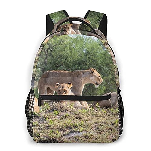 Zaino multi-tempo libero Famiglia di leoni in Sudafrica, sport da viaggio, borsa da scuola per giovani adulti, studenti universitari, zaini per sport all'aria aperta, corsa, viaggio, escursioni