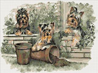 Yorkshire Terrier Puppies Counted Cross Stitch Kit