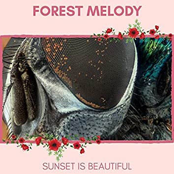 Forest Melody - Sunset is Beautiful