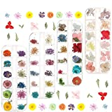 Tanersoned 144 Piezas Real Flores secas para decoración de uñas, 4 Cajas 3D Nail Art Stickers Decoración para Nail DIY Manicura Artes