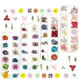 Rubywoo&chili 4 Box Nagel Getrocknete Blume 144 Stücke getrocknete Blume Nail Art 3D Nagelapplikation Nagel Kunst Zubehör für Nagel Dekor, Maniküre DIY Design
