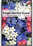 200 Stück Gemischte Vergissmeinnicht-Blumensamen Schöne Duftende Gartenblumensamen Für Das Pflanzen Auf Dem Gartenbalkon Exquisite Dekoration Schnittblumen