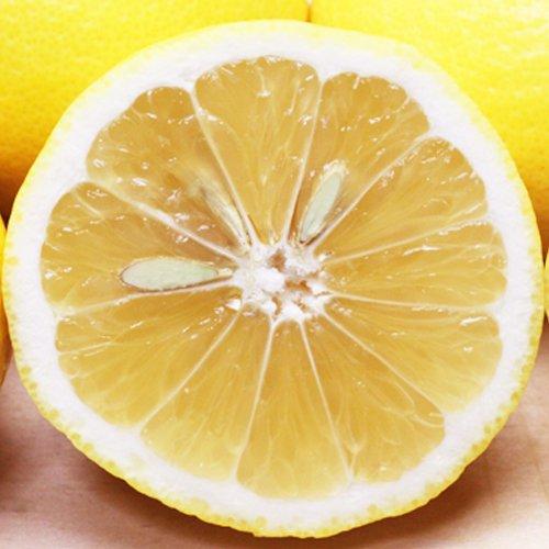 「ファミリー小夏10」愛媛ニューサマーオレンジ(小夏)ファミリー用10kg(10kg×1箱) フルーツ 果物 通販
