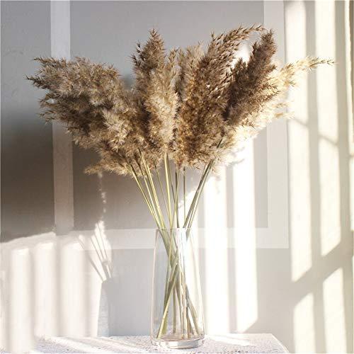 WXQHYD 10 PC gibt Verschiffen-Reale Getrocknete Pampas-Gras-Dekor Hochzeit Blumen-Bündel natürliche Pflanzen-Dekor pampasgras (Color : 10 pcs raw Color, Size : M)