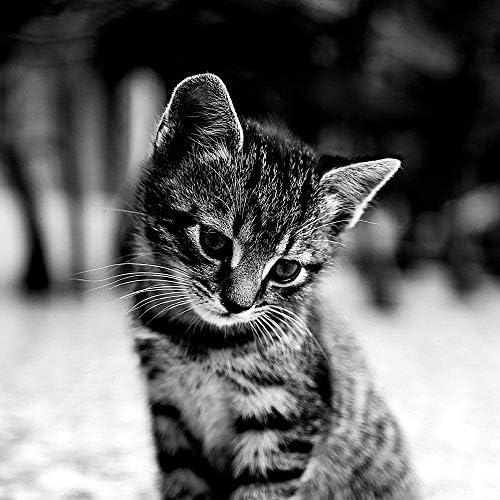 猫の音楽 クラシック