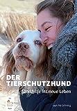 Der Tierschutzhund: Starthilfe ins neue Leben