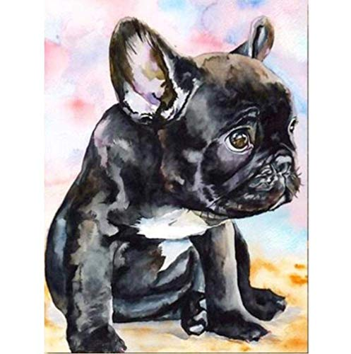 DIY Digital Oil Painting Kits Paint by Numbers for Adults Colorful French Bulldog Drawing On Canvas Animal Dog Paintings Wall Art Poster Home Decor-40X50cm(Frameless)