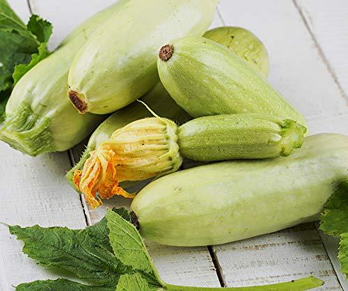 Bobby-Seeds Zucchinisamen Lungo Bianco Portion