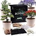 JC-JDFMY11 Bonsai Tree Starter Kit-4 Kinds of Bonsai Tree Gardening Growing Kits, Creative Gifts for Indoor Planting Plants, Kid's Educational Gardening Birthday Toys, DIY Crafts