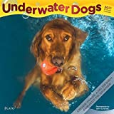 BrownTrout, 2021 Underwater Dogs Wall Calendar