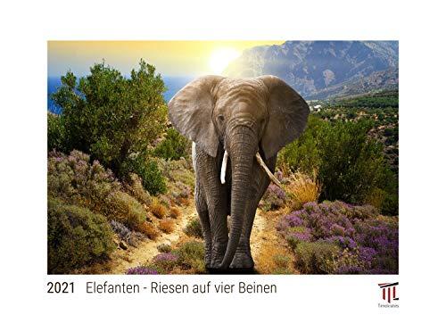 Elefanten - Riesen auf vier Beinen 2021 - White Edition - Timokrates Kalender, Wandkalender, Bildkalender - DIN A4 (ca. 30 x 21 cm)