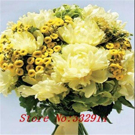 Vente! 200 Graines PURPLE tanaisie Lacy ornemental Fleur d'expédition libre