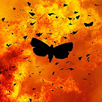 Moths Into the Flames