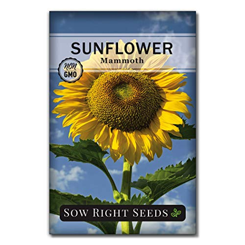 Sow Right Seeds - Mammoth Sunflower Seeds to Plant and Grow Giant Sun Flowers in Your Garden.; Non-GMO Heirloom Seeds; Full Instructions for Planting; Wonderful Gardening Gifts (1)