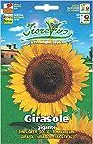 Hortus 60SDFG184 Fiorevivo Girasole Gigante, 13x0.2x20 cm