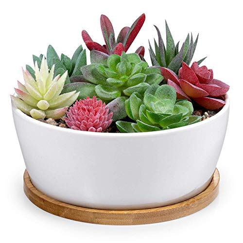 Binwen 6.5 inch Round Ceramic White Succulent Cactus Planters Pots with Drainage Bamboo Trays - Plants Not Included