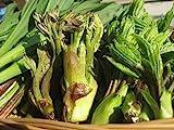 長野県産 春の味覚! 旬の特産 天然山菜 約800g以上3~6種類 天ぷらがたくさんできますよセット