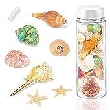 DomeStar Sea Shells, Mixed Beach Seashells Ocean Sea Shells Colorful Natural Seashells for Candle Making Home Decoration Party Wedding Vase Filler