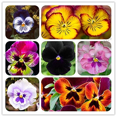 200 Stück Schöne Stiefmütterchen Pflanze Mix Farbe Wellenförmige Viola Blumen Bonsai vergossen DIY Haus & Garten Freies Verschiffen: Mix