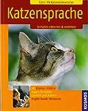 Katzensprache: Verhalten erkennen & verstehen