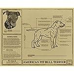 American Pit Bull Terrier Blueprint 4