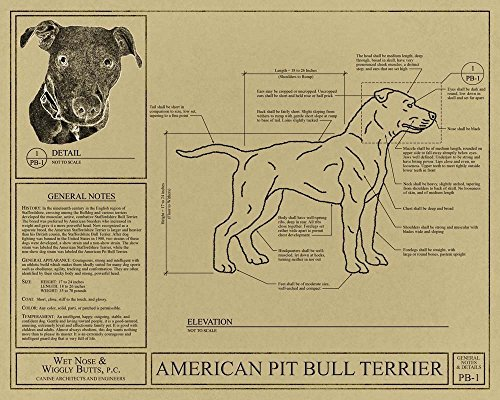 American Pit Bull Terrier Blueprint 2