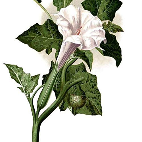 Charm4you Planta Maceta Semillas,Semillas de Flores Silvestres a granel-10g,Raras Semillas de césped