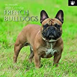 The Gifted Stationery 2020 Wandkalender'French Bulldogs' (GSC19494)