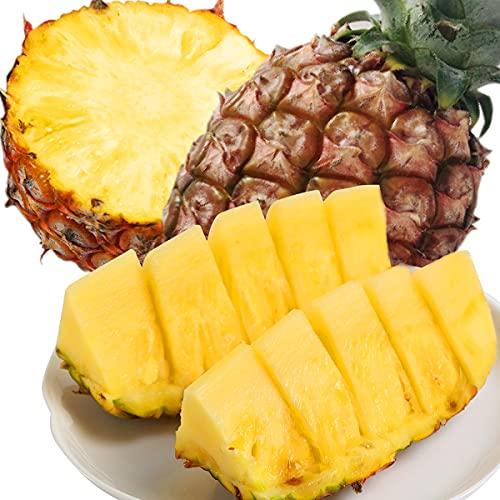 SDGs推進 【頑張れ! 台湾 】 台湾産 金鑽パイン 台農17号 パイナップル 等級A 最高糖度20 ※野菜ソムリエ推奨 (1.5×1個(1.5キロ))