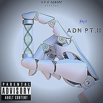 ADN Pt.II