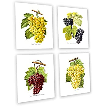 Grapes Kitchen Decor Art Prints Set of 4 Unframed French Wine / Raisin Grapes by Gnosis Picture Archive Grapes_4A