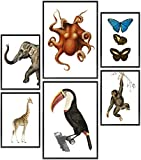 Wolfenthal Vintage Edition Poster Set »Tiere« |