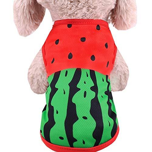 weichuang Chaleco para mascotas lindo ropa de verano para perros pequeos con dibujos animados, camiseta, disfraz de gato, ropa de verano para cachorros (color: sanda, talla: XXL)