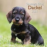 Dackel 2021 - Wand-Kalender - Broschüren-Kalender - A&I - 30x30 - 30x60 geöffnet - Hunde: Sausage Dog