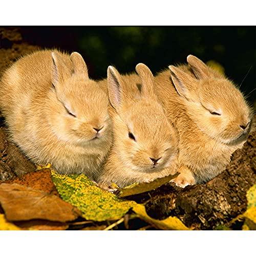 Verf op nummers voor volwassenen konijn dier digitale olie canvas schilderij kits voor volwassenen kinderen verjaardag…