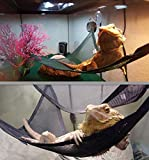 CDL Reptile Lizards Snakes Hammock Lounger Ladder Accessories Net Hanging Bed Toys (12'x12'x18')