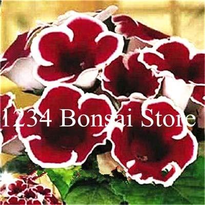 Kalash Neue 100 PC Gloxinie Blumensamen für Gartendunkelroten weiß