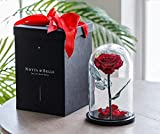 Notta&Belle Rose en una cúpula de cristal | «BONITA» ROSES | Vive durante 5 años | Tamaño Premium 10,6 pulgadas. | La Bella y la Bestia