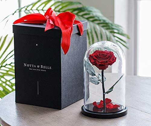 Premium Ewige Rose (Rote, 27 cm.), «Wow!» Effekt Geschenkbox, Bonita Rose Bud Quality, Schöne und das Biest Rose im Glas