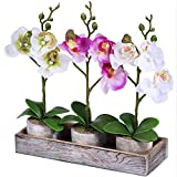 Set of 3 Fake Orchid Assortment...