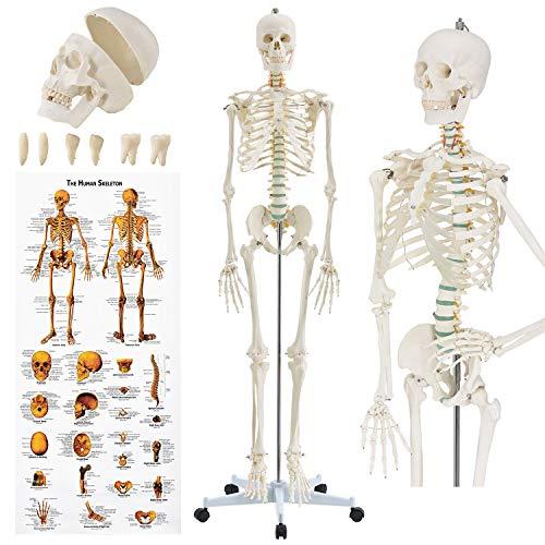 Juskys Anatomie Skelett - Modell inkl. Anatomie-Poster, Stativ mit Rollen & Schutz-Haube - lebensgroß
