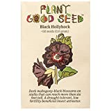 Black Hollyhock Flower Seeds (~50): Non-GMO, Heirloom, Open Pollinated Seeds from The United States